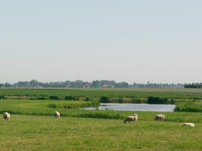Afschaffen melkquotum maakt van heel Nederland een mestvaalt