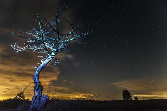 Nacht van het Wad
