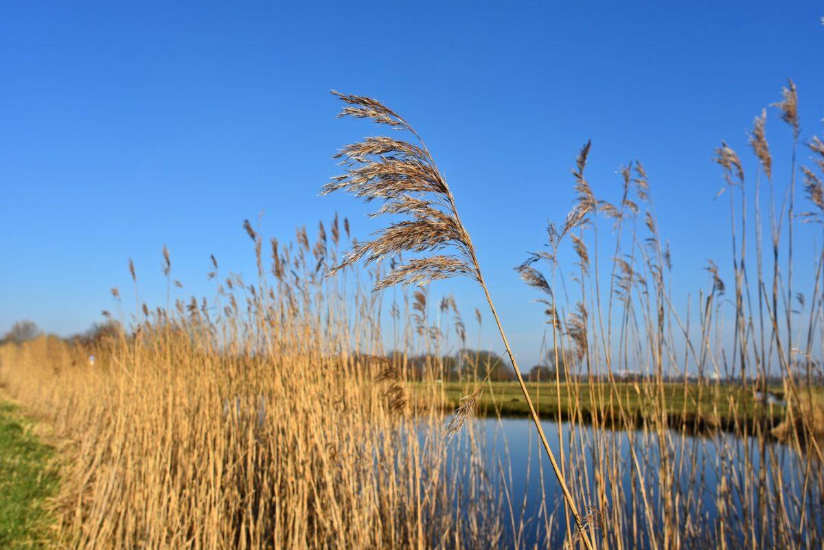 Veel handtekeningen voor bescherming Europees water