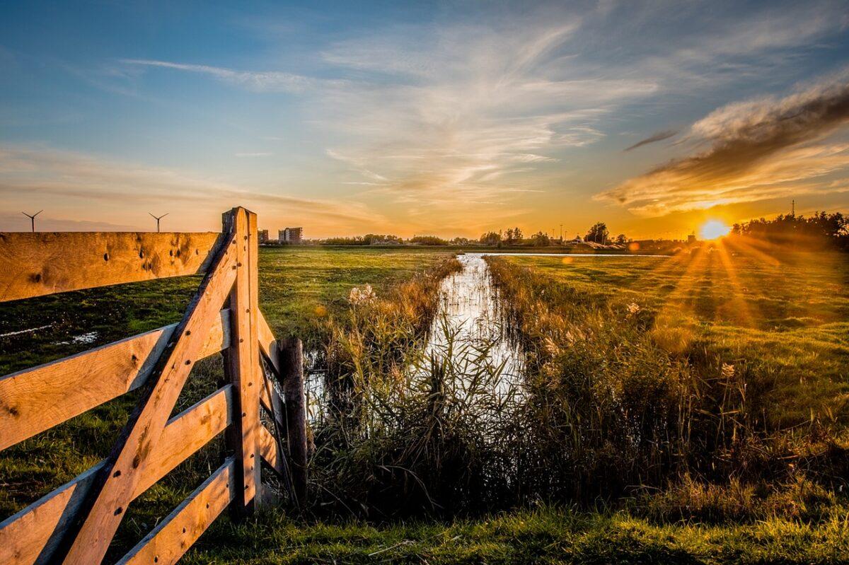 Stikstofcrisis als kans voor natuur en álle Nederlanders