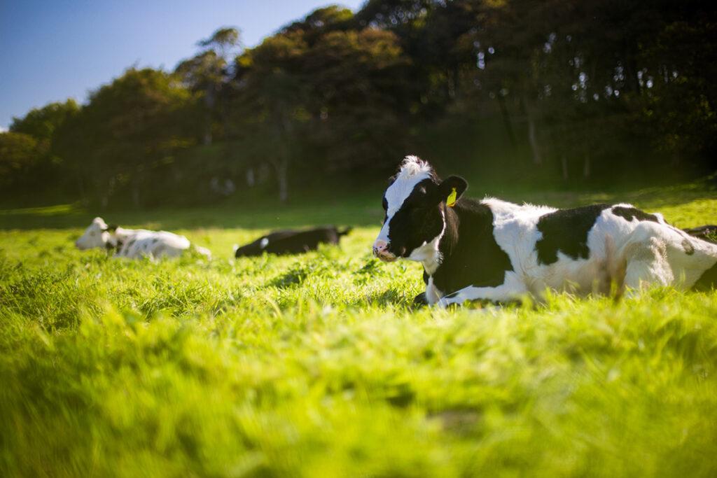 Kabinetsplannen: Eerste stap op weg naar meer duurzame landbouw