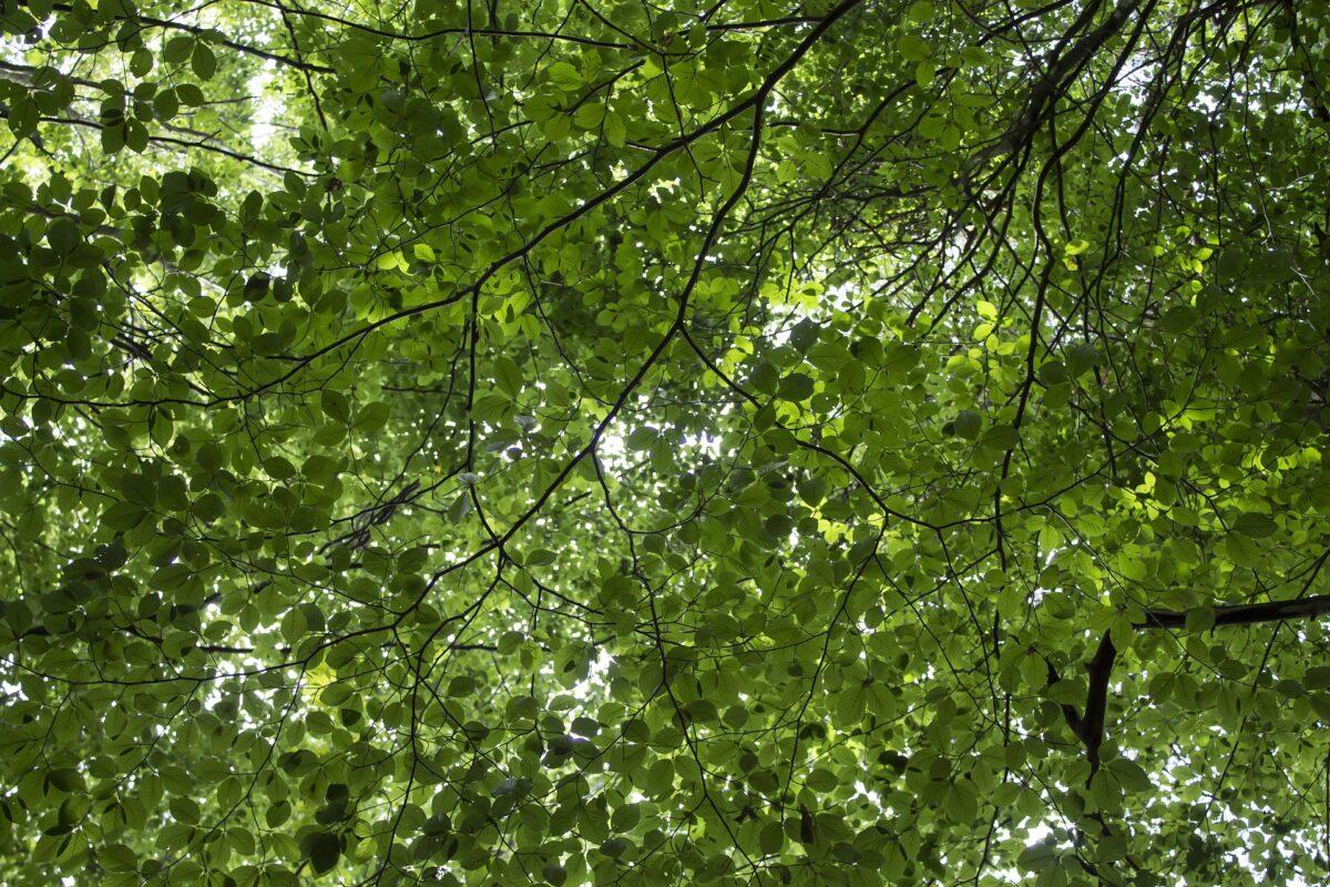 Natuur- en Milieufederaties gaan in gesprek over groen herstel