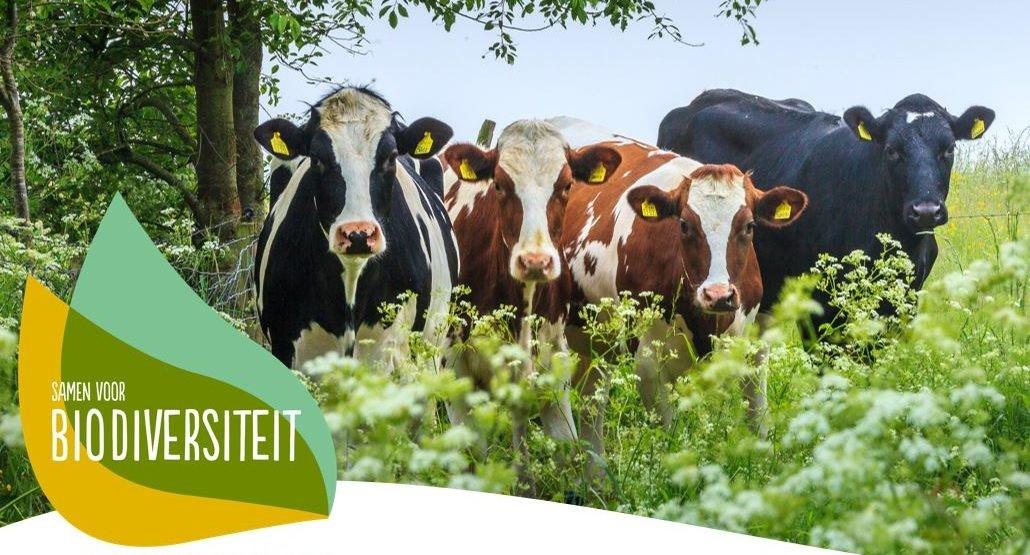 Deltaplan Biodiversiteitsherstel stimuleert acht innovatieve projecten