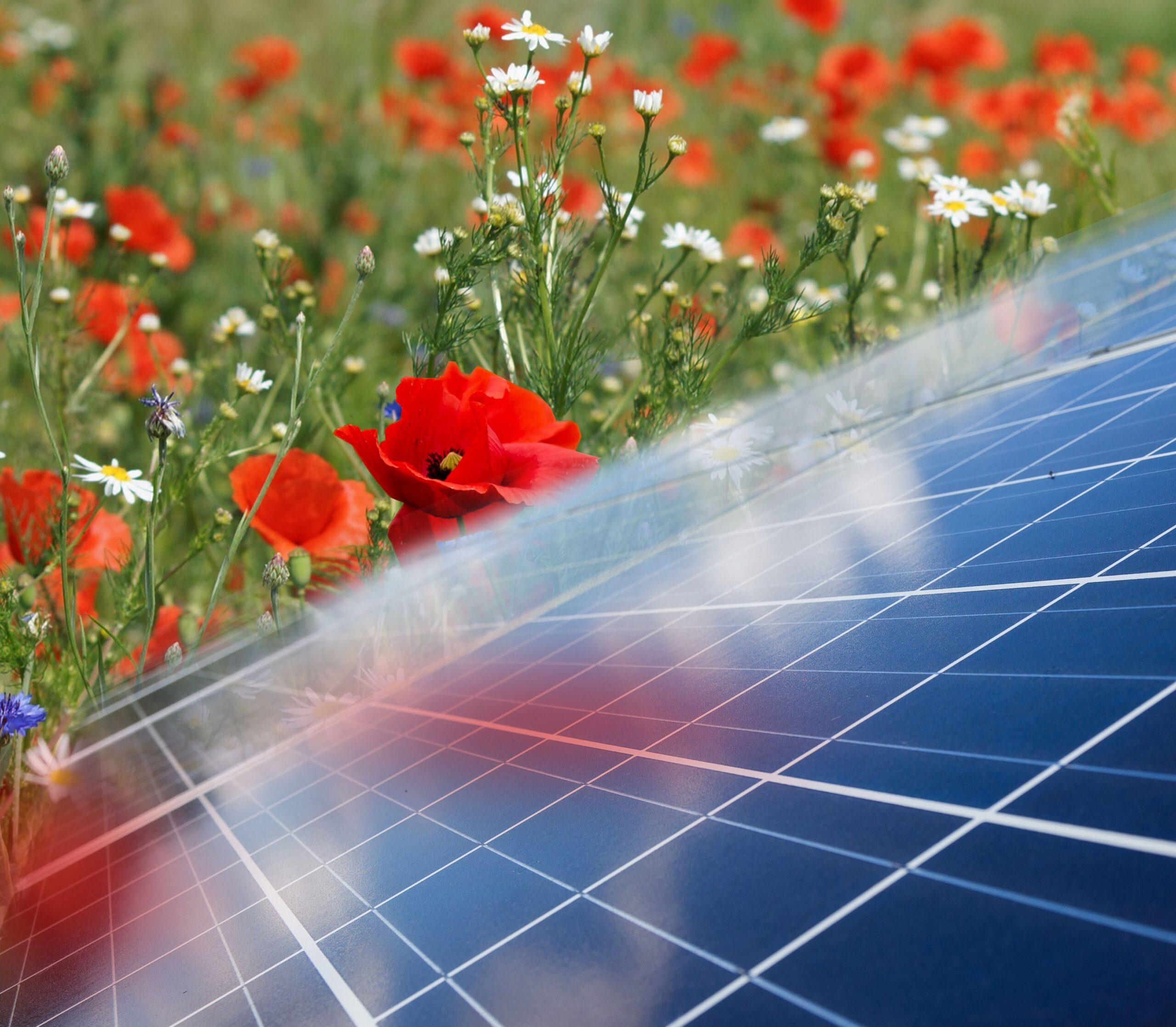 zonnepanelen natuur bloemen RES