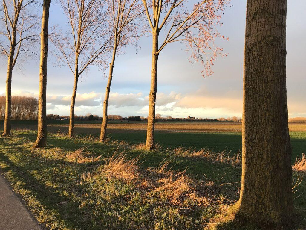 Berm bomen Nederland