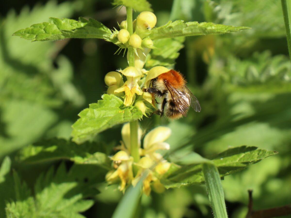 Wil jij bijen en boeren redden? Teken de petitie